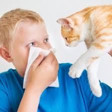 Allergiya na koshku
